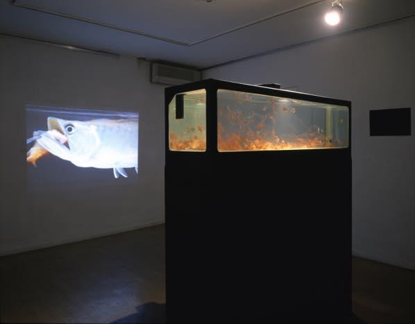 闇 日韓交流展(2001) タンク、鉄、金魚、アロアナ、ビデオ、プロジェクター